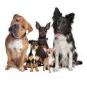 Multiple Pets Insurance