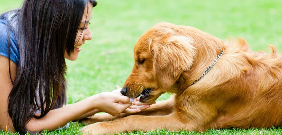 pet insurance behavioural therapy