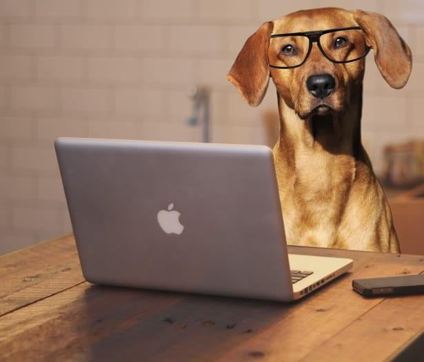 dog-computer