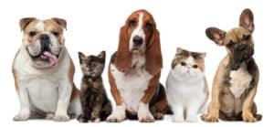 Multi Pet Insurance