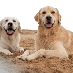Pet Insurance Accident Policy