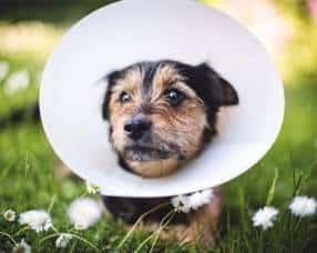 pet insurance complaints